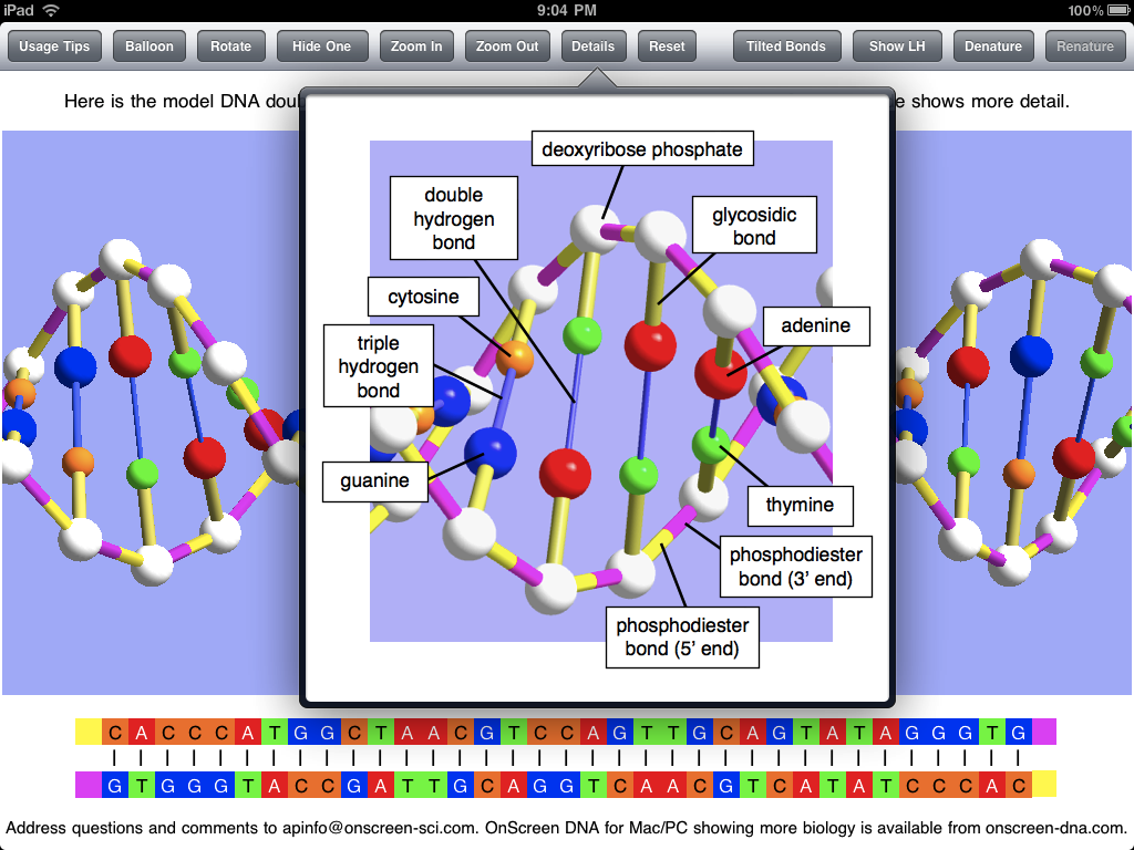 Dna polarity on screen scientist popover ccuart Images