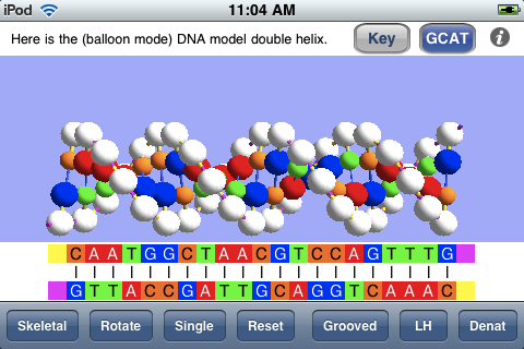 3d dna model project labeled the structure is shown with